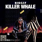 BigCat — Killer Whale