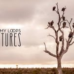 Jeremy Loops — Vultures
